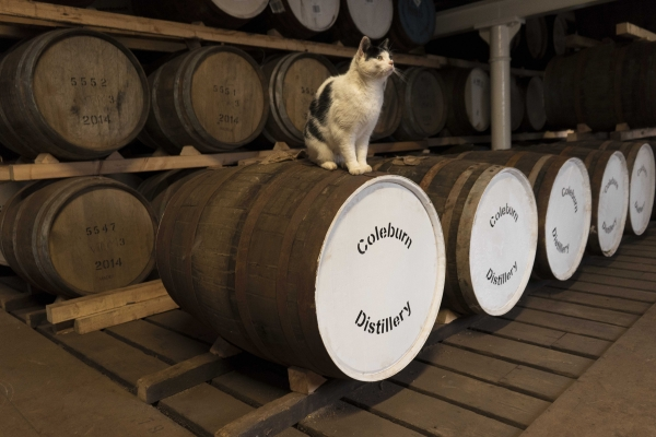 Maisie - The Distillery Cat